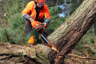 man sawing down tree